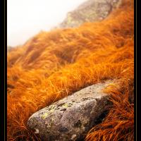Kámen v trávě